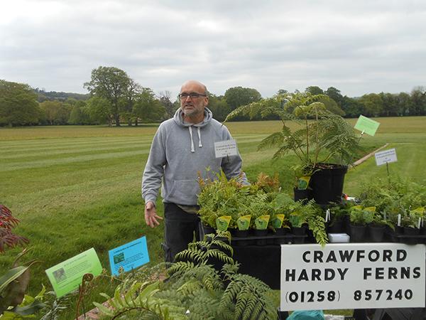 Crawford Hardy Ferns