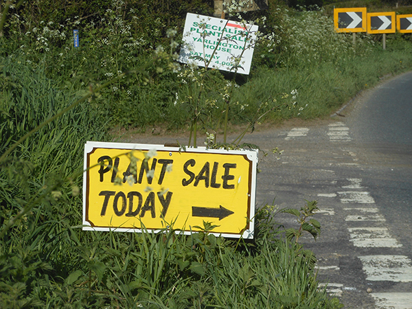 Sherborne Plant Fair