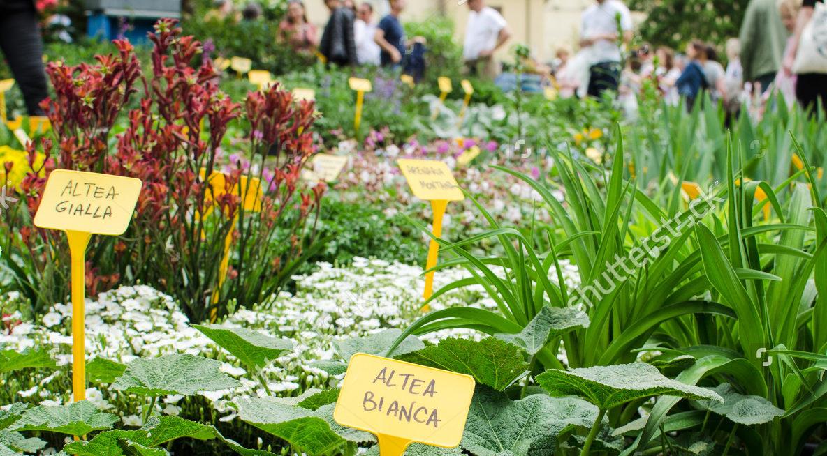 Plant fairs header