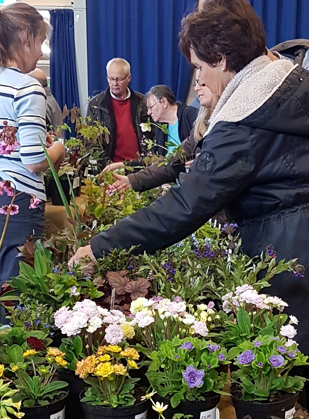 Customer shopping at Sherborne Plant Fair 2019