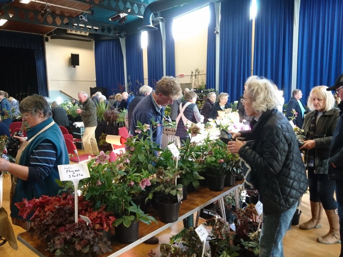 Promotional image for Plant fair