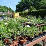 Paddock Plants nursery sales area
